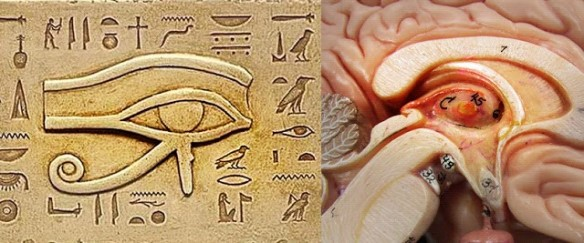 Menstrution and the Pineal Gland